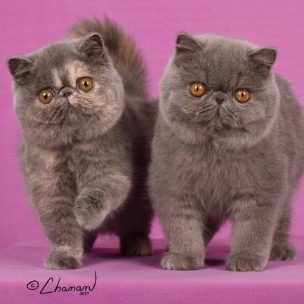 48th Annual Lewis And Clark Cat Show – Events